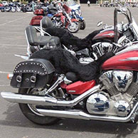 Michelle's '04 Honda VTX w/ Charger Series Saddlebags